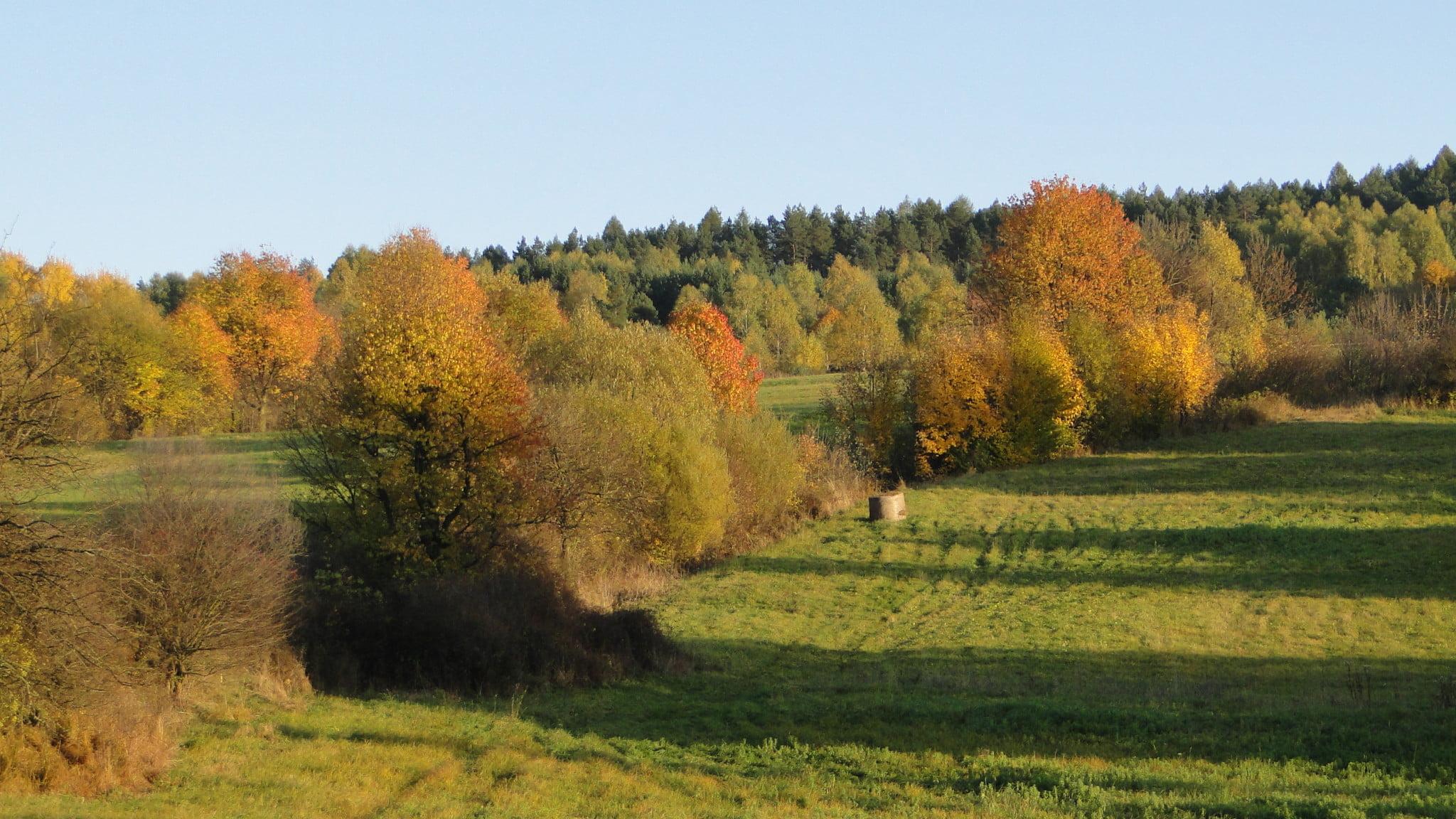 Już jesień 1