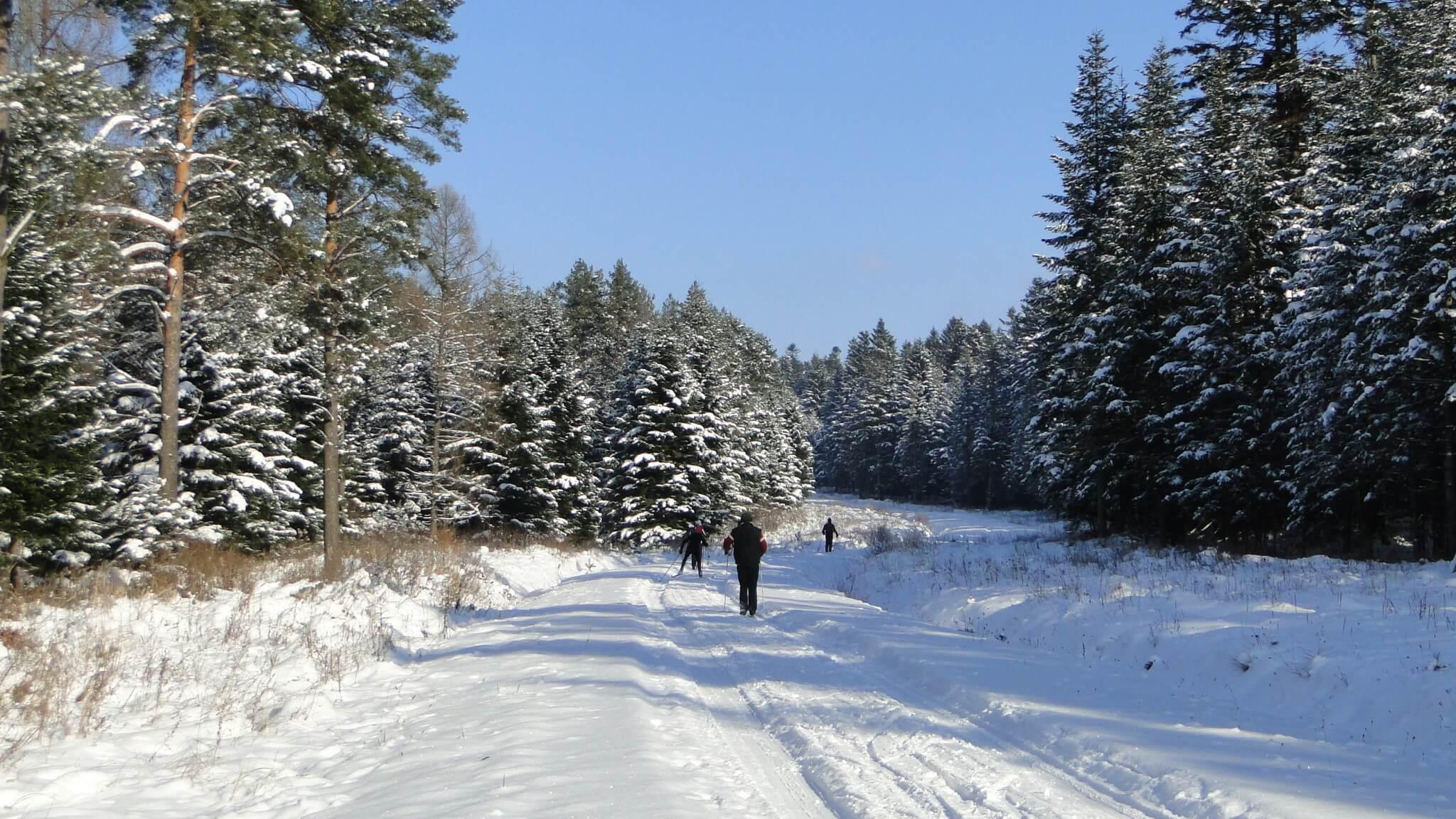 Na nartach do Polan Surowicznych! 1