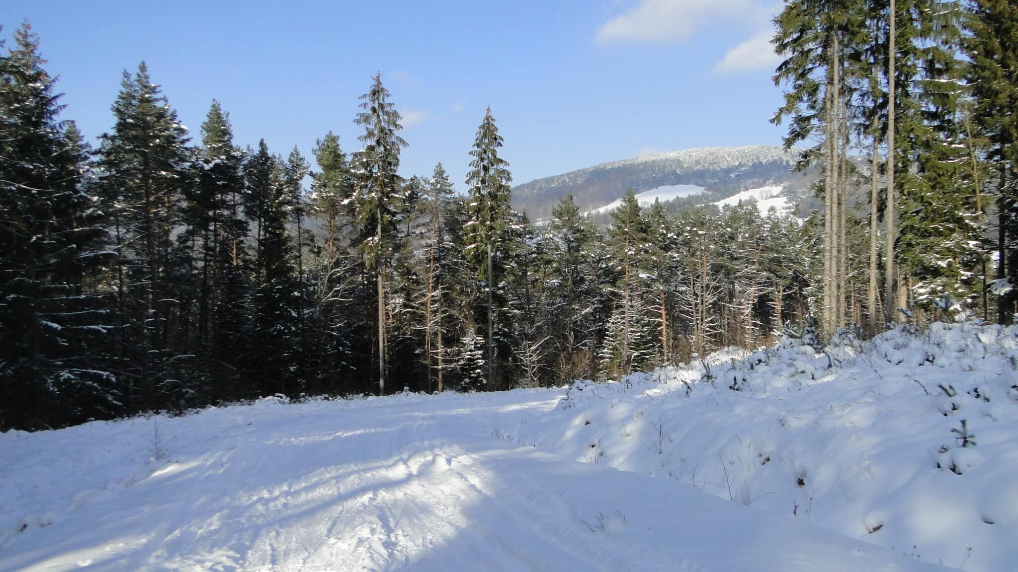 Na nartach do Polan Surowicznych! 3