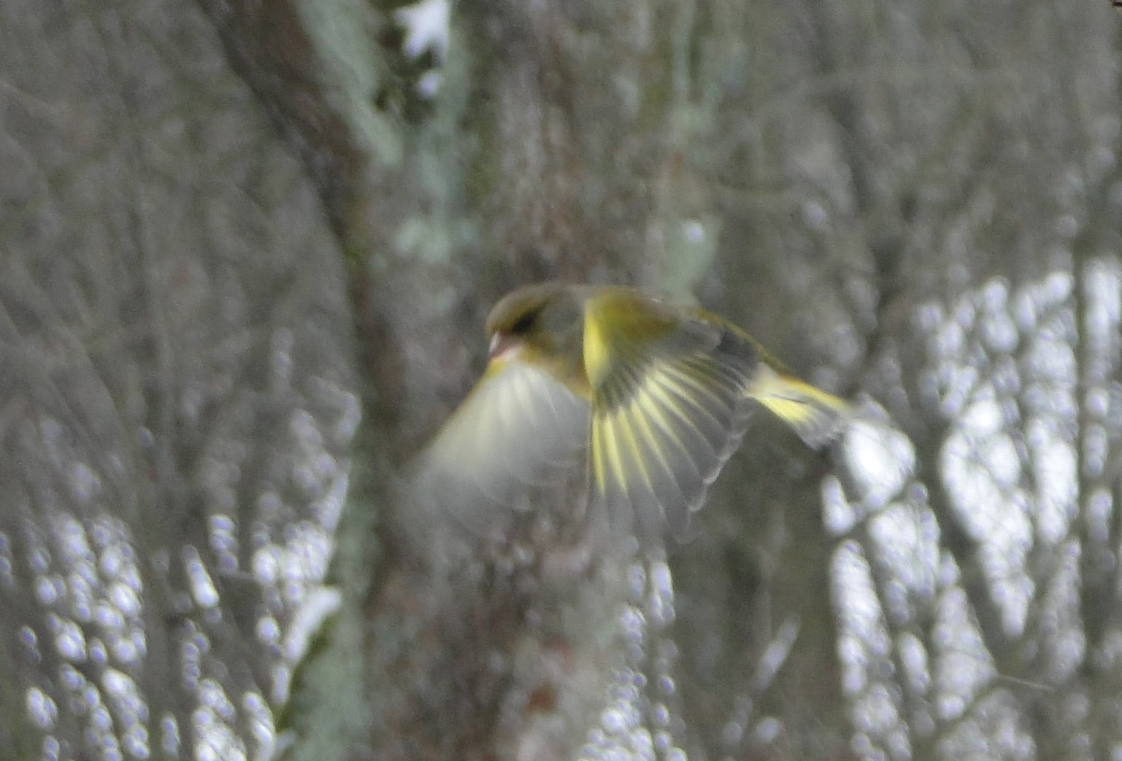 Nasi zimowi ptasi przyjaciele 8