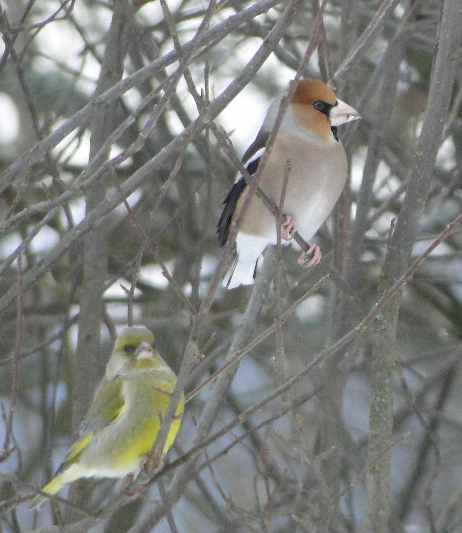 Nasi zimowi ptasi przyjaciele 7