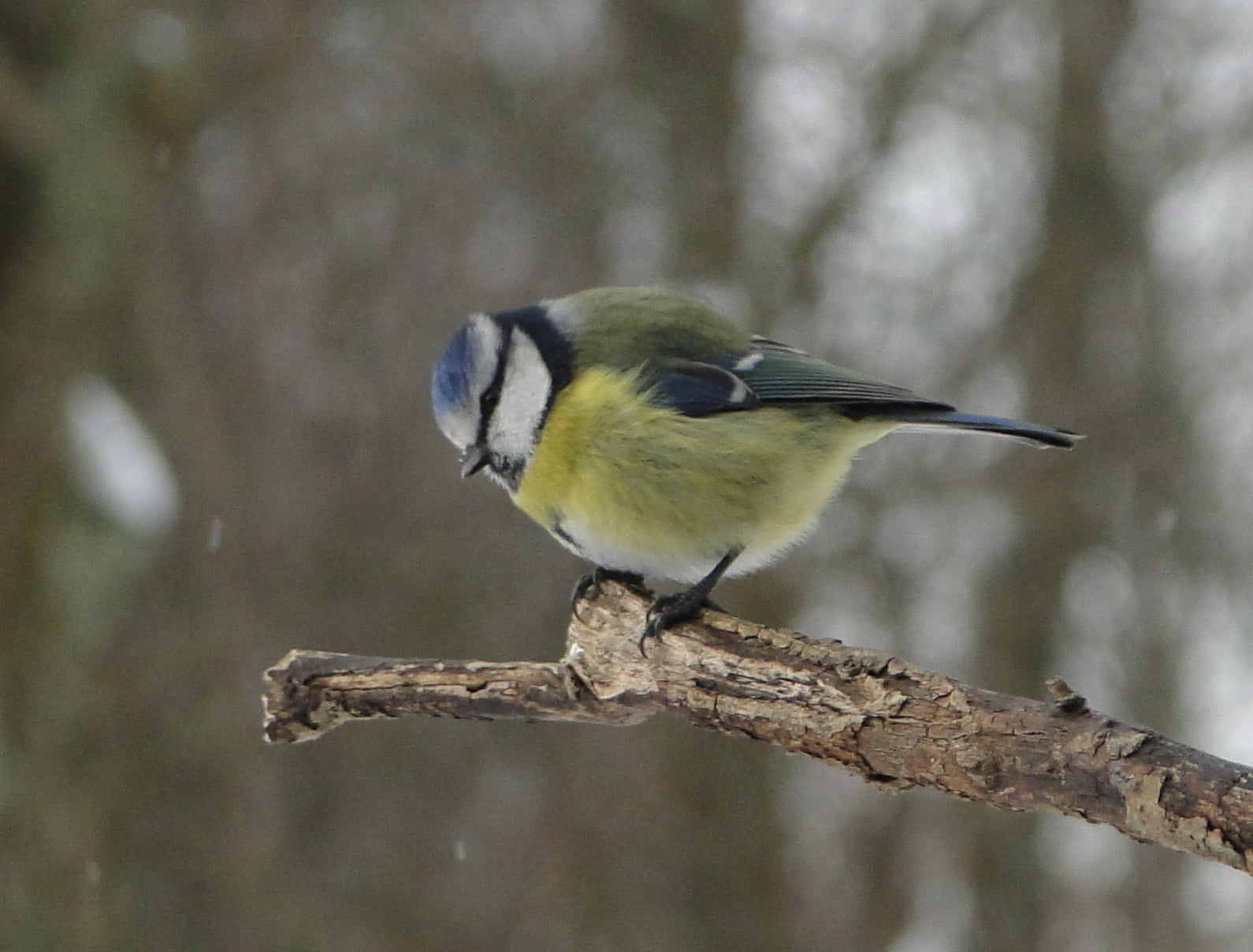 Nasi zimowi ptasi przyjaciele 2