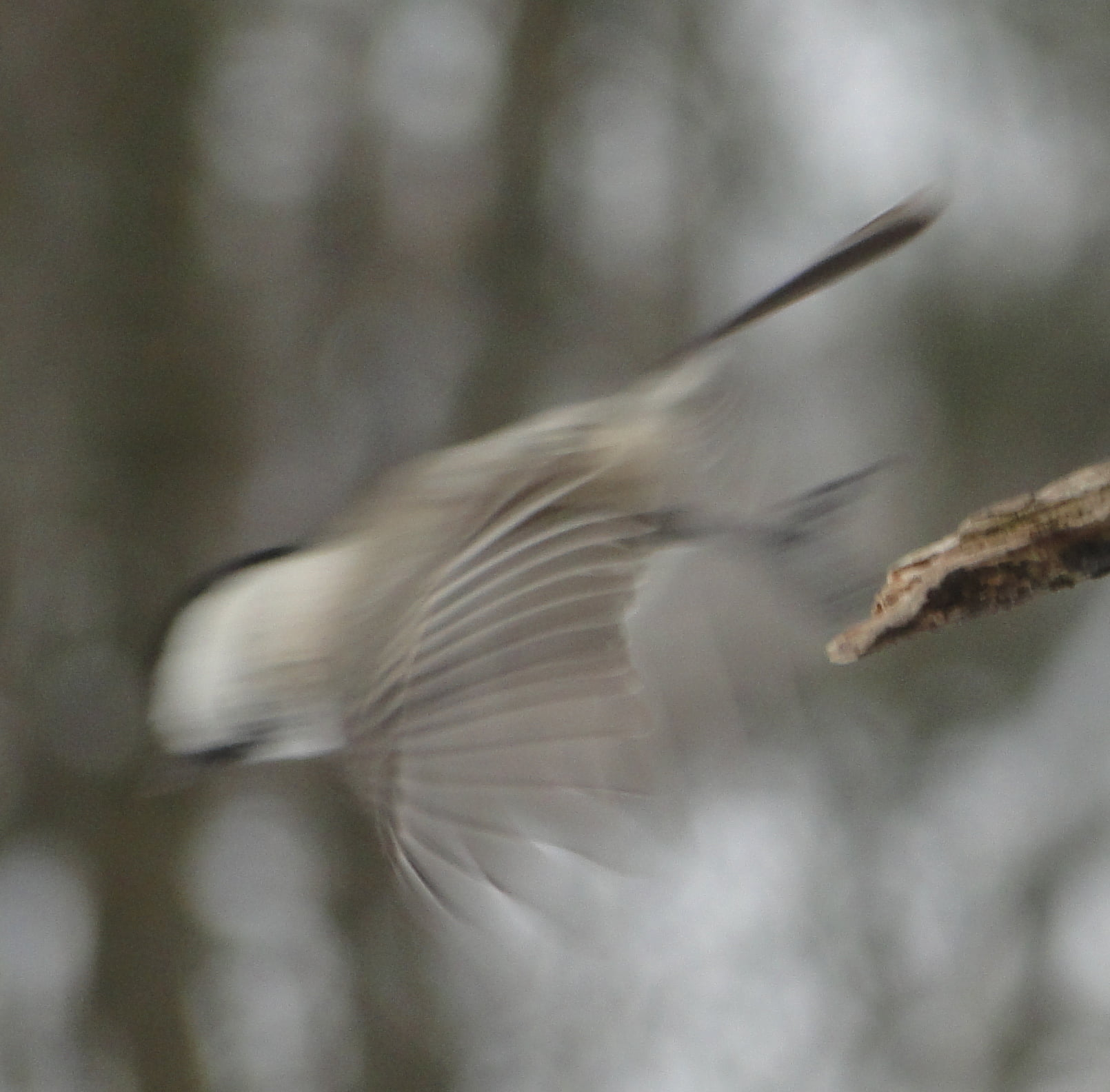 Nasi zimowi ptasi przyjaciele 5