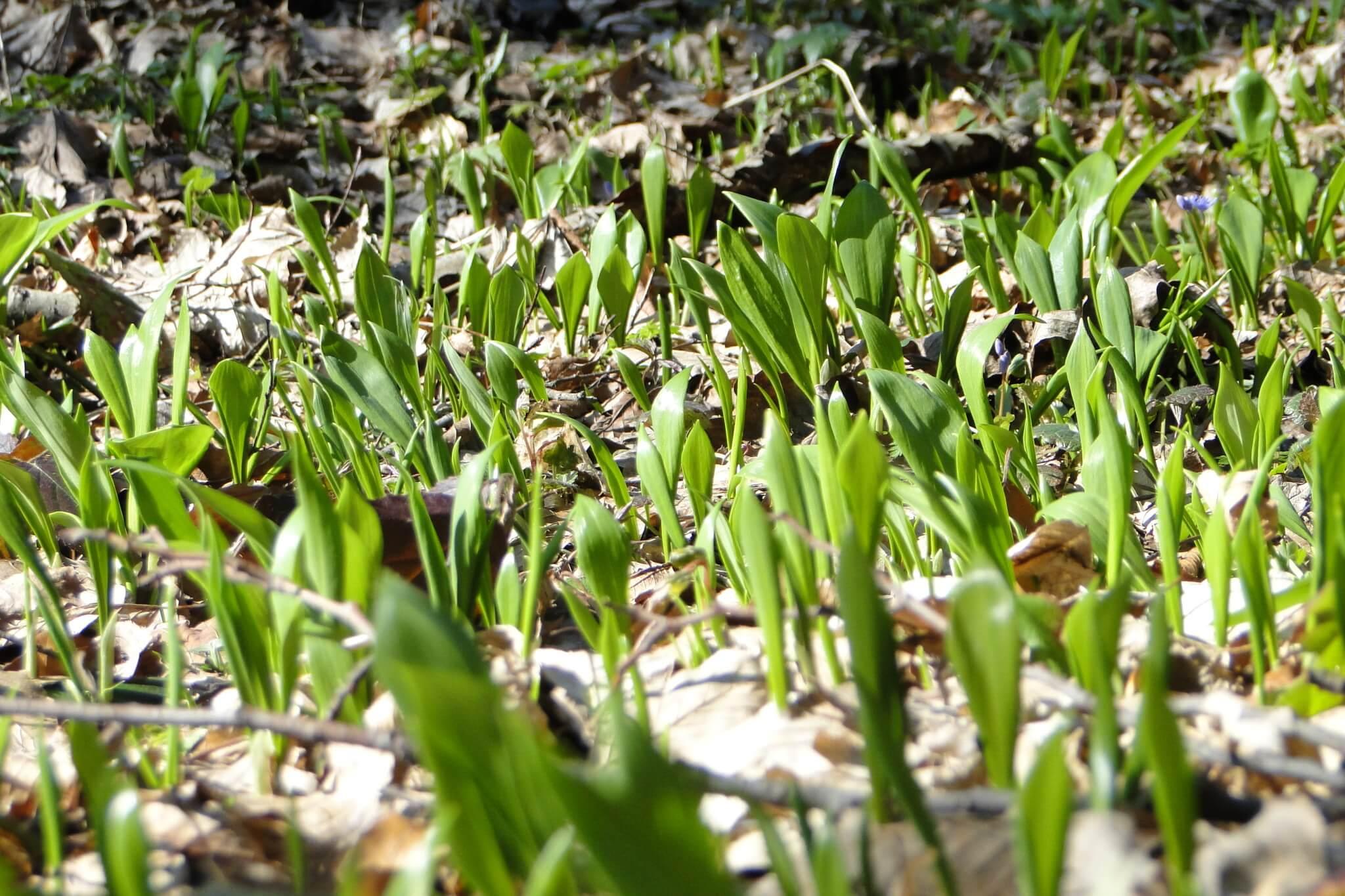 Przełom Jasiołki - w poszukiwaniu wiosny