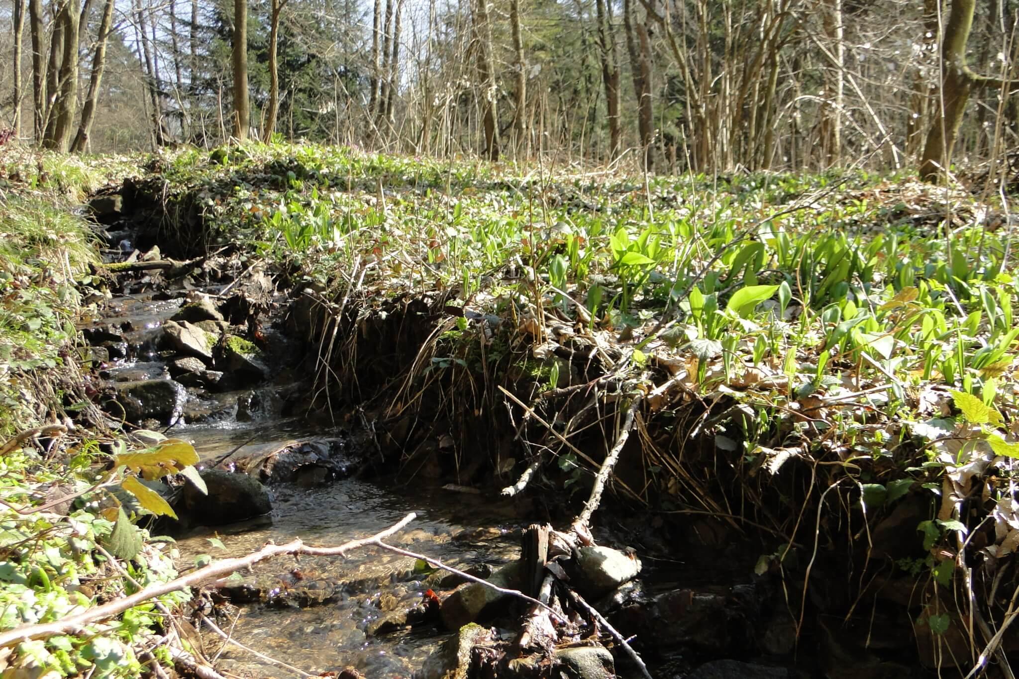 Przełom Jasiołki - wposzukiwaniu wiosny 1