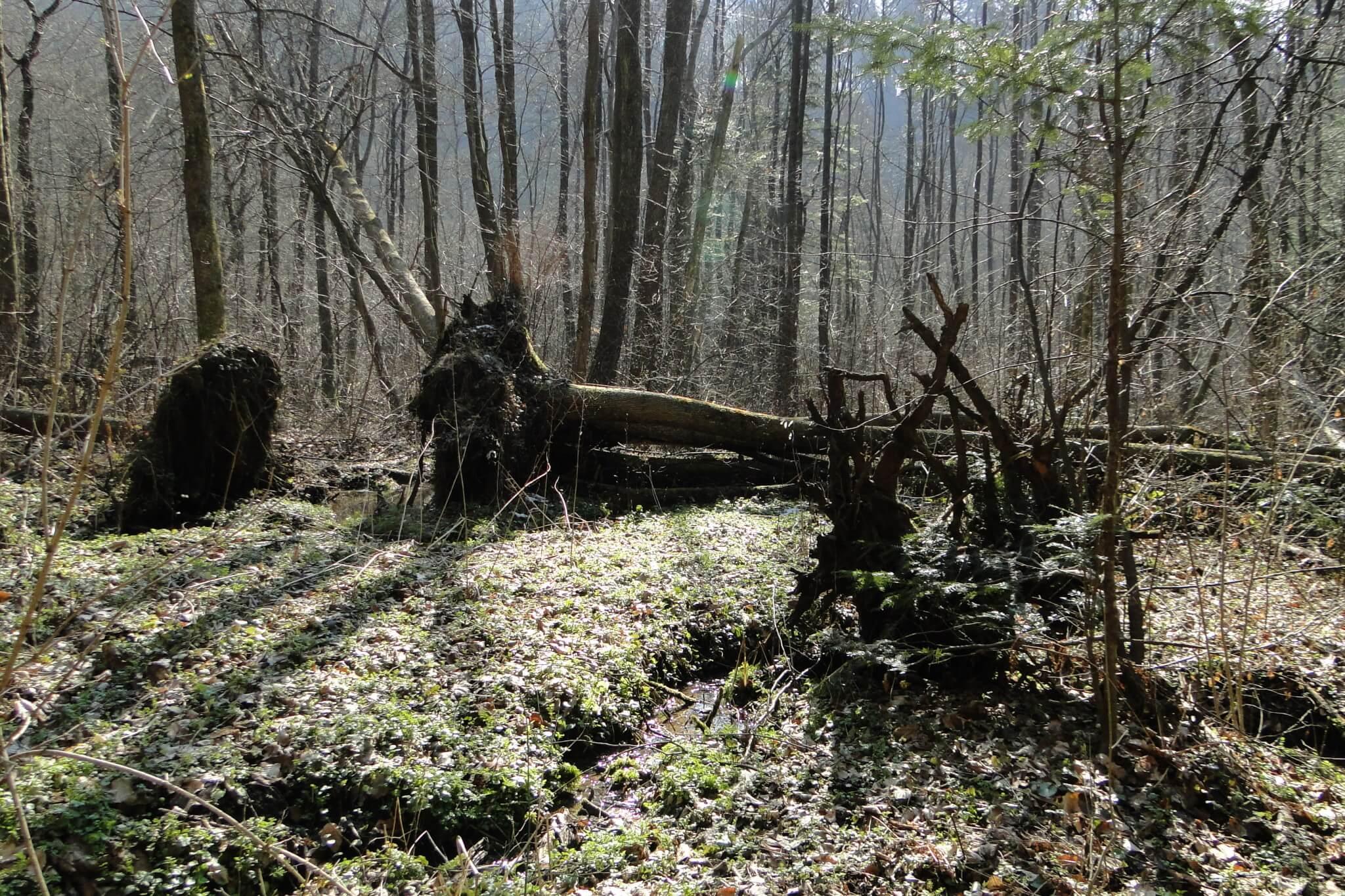 Przełom Jasiołki - wposzukiwaniu wiosny 2