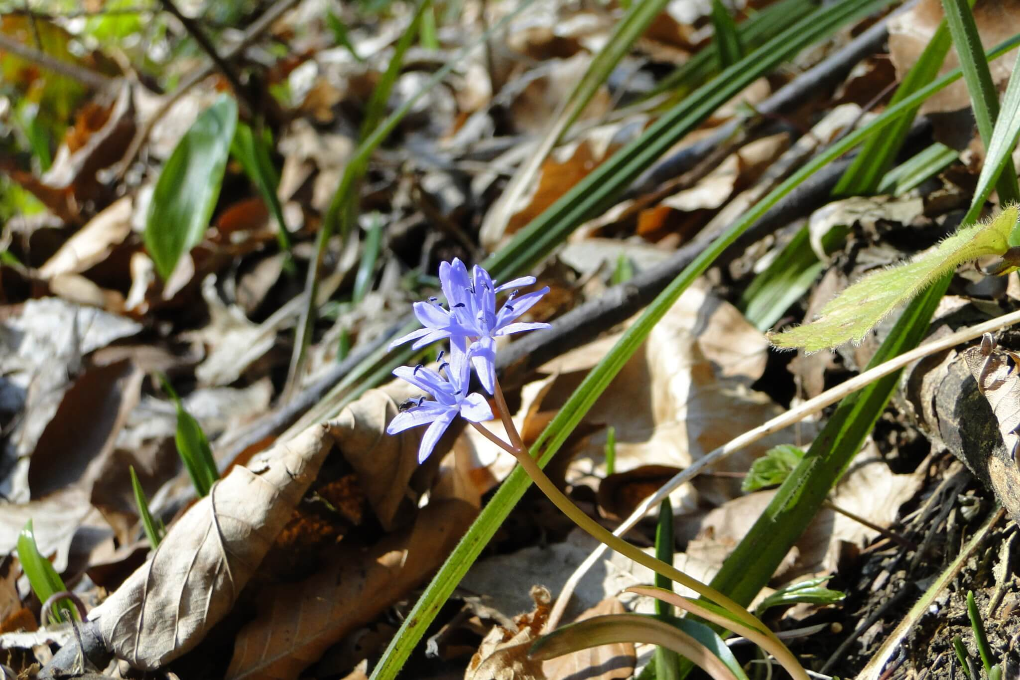 Przełom Jasiołki - wposzukiwaniu wiosny 3