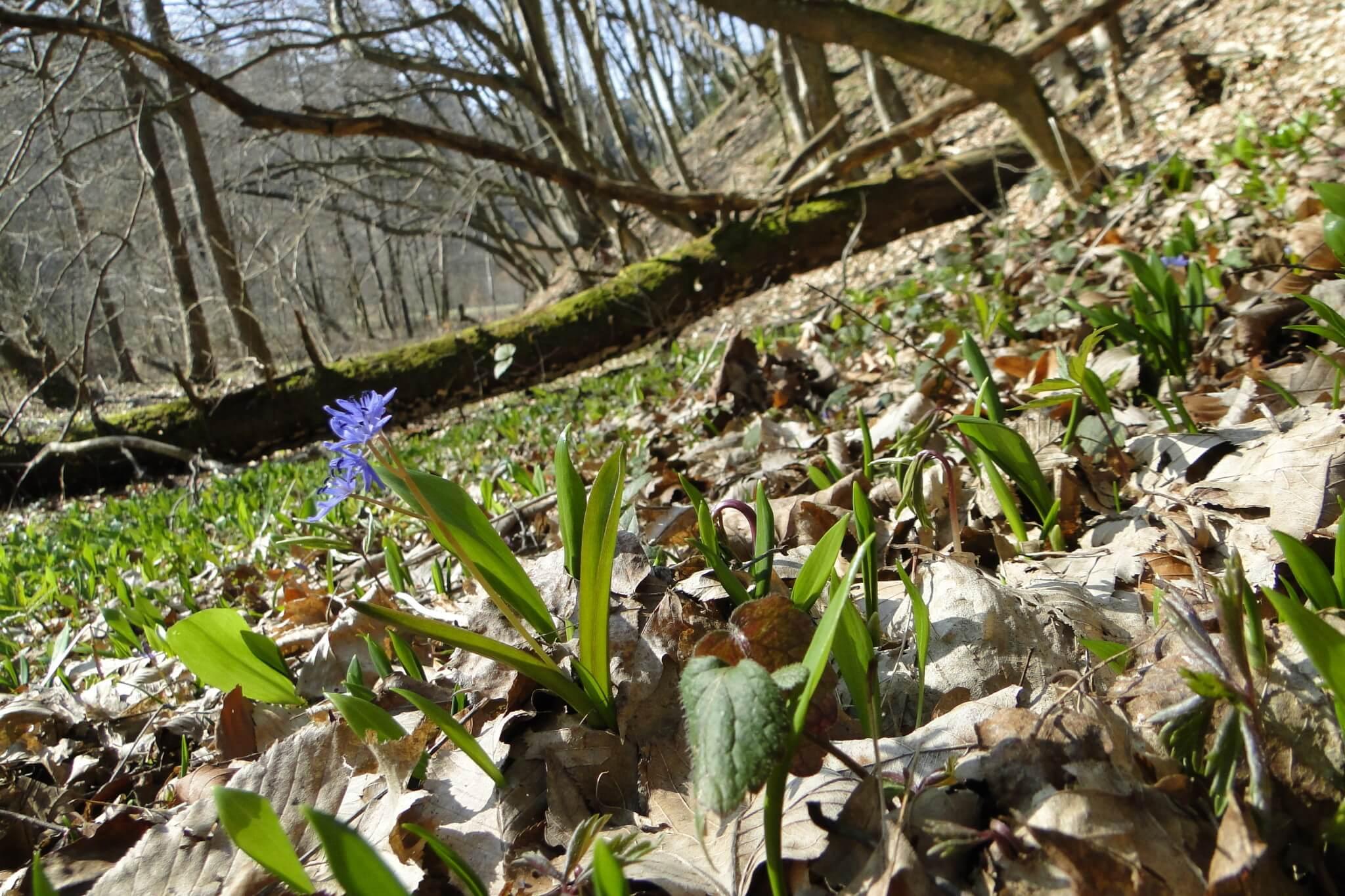 Przełom Jasiołki - wposzukiwaniu wiosny 4