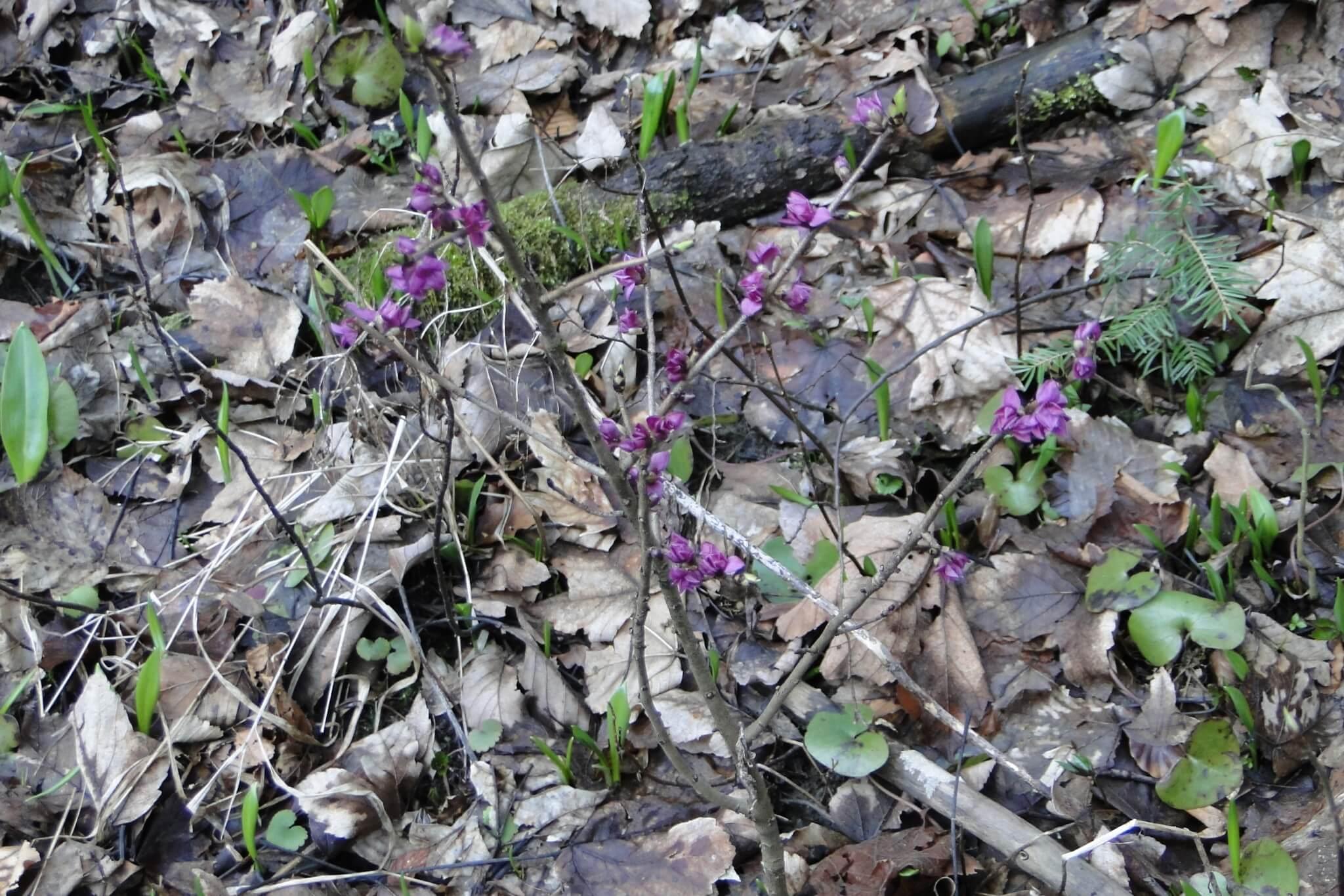 Przełom Jasiołki - wposzukiwaniu wiosny 6