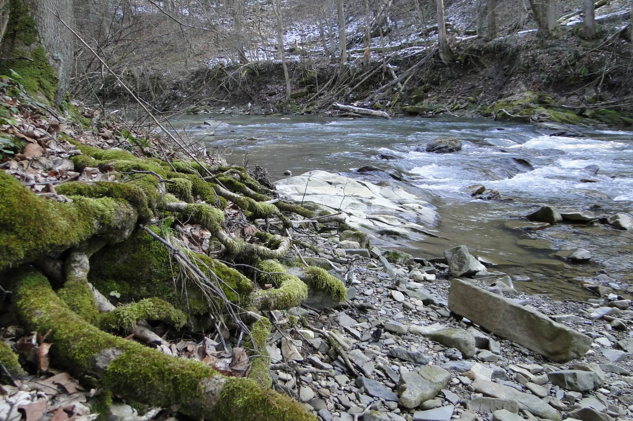 Przełom Jasiołki - w poszukiwaniu wiosny 8