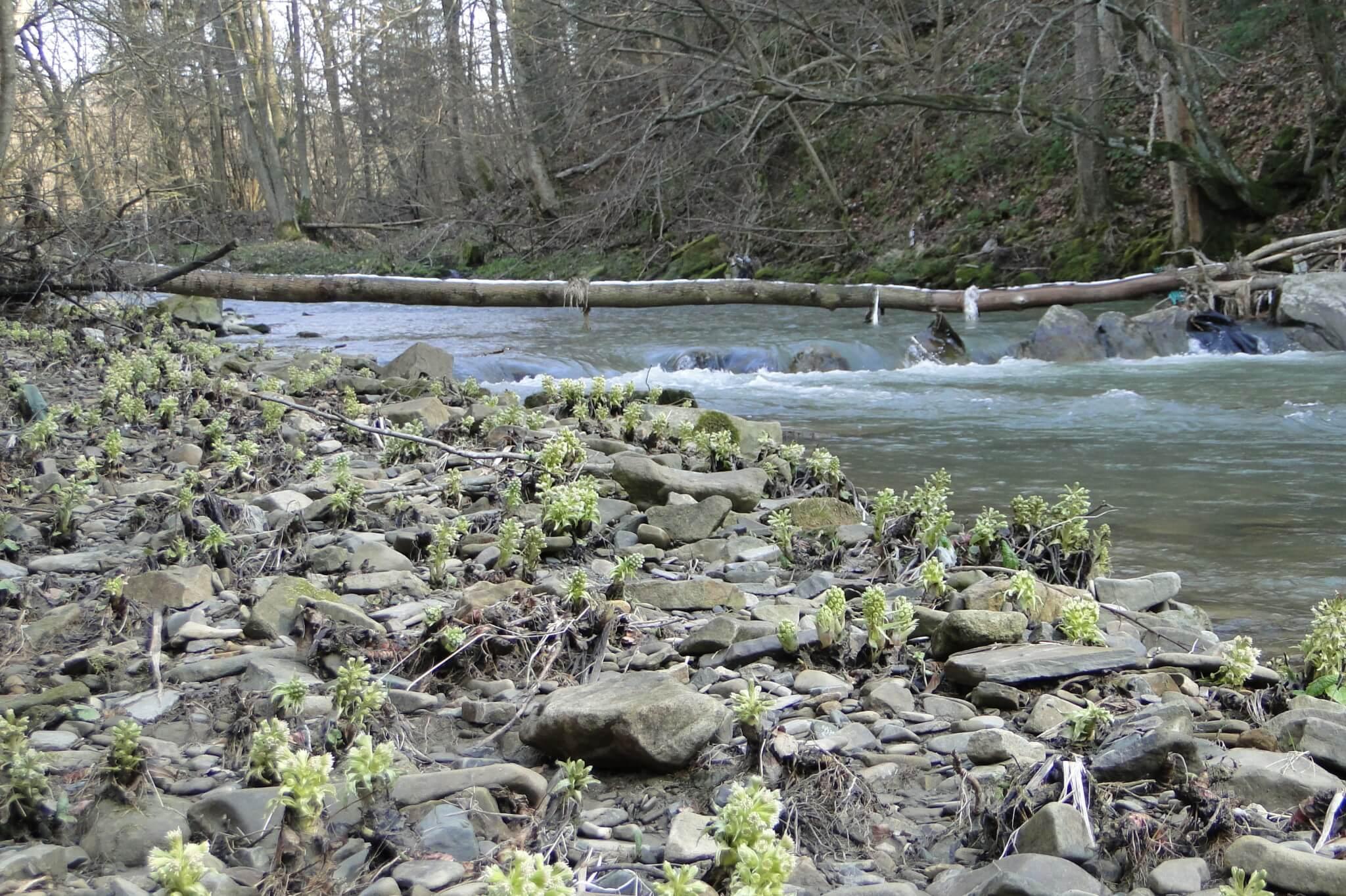 Przełom Jasiołki - wposzukiwaniu wiosny 9