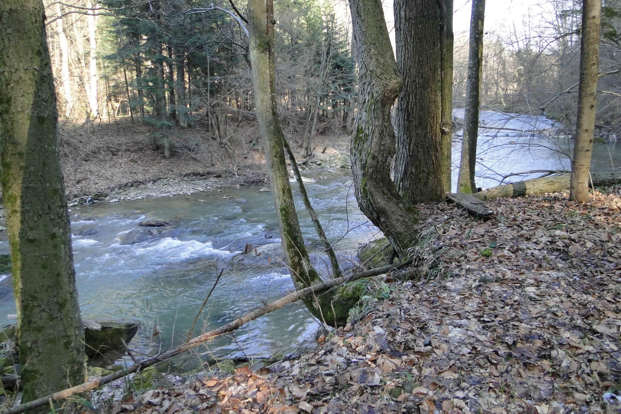 Przełom Jasiołki - w poszukiwaniu wiosny 11