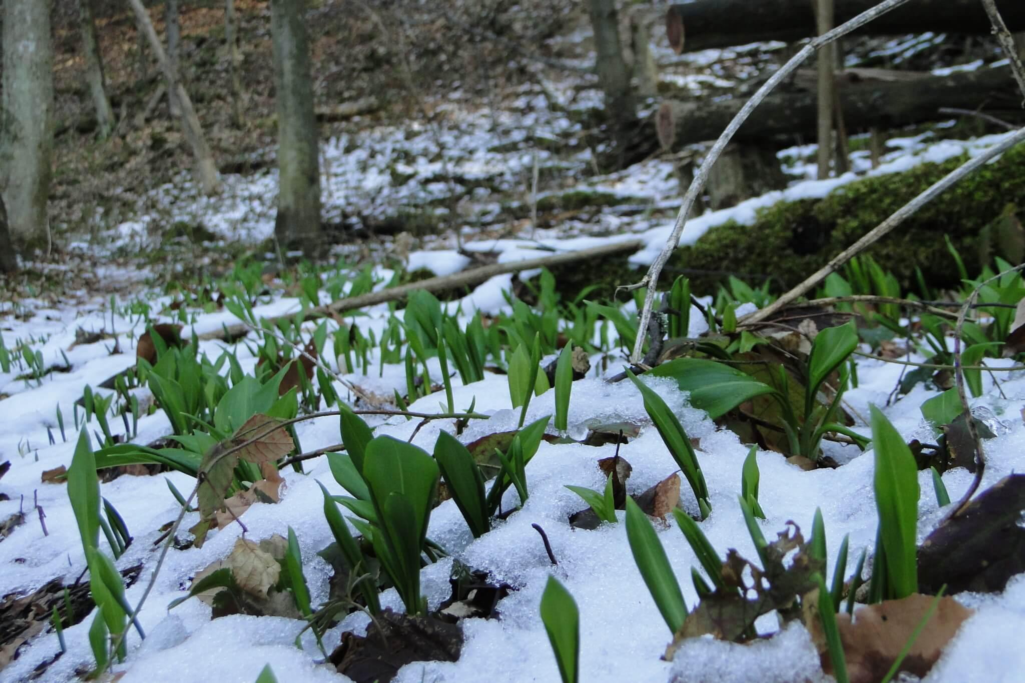 Przełom Jasiołki - wposzukiwaniu wiosny 12