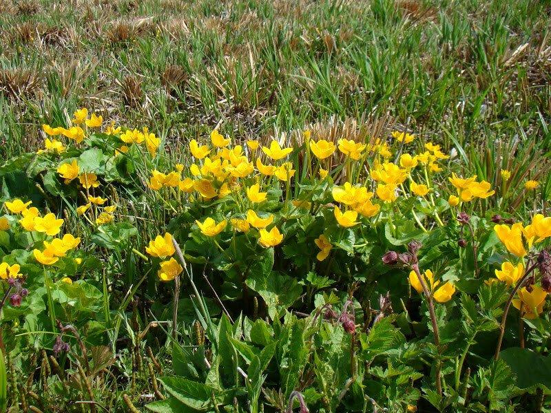 Beskid kwitnący wiosną 3