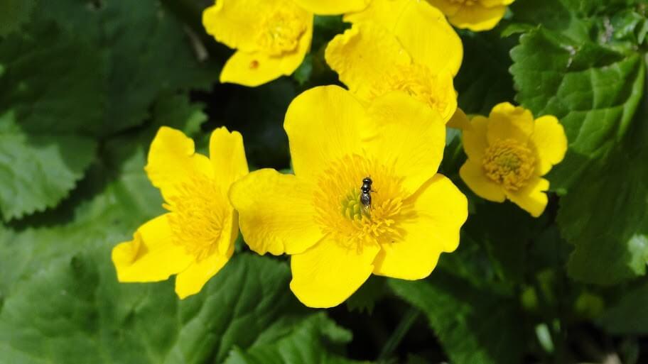 Beskid kwitnący wiosną 6
