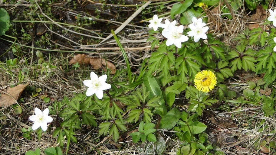 Beskid kwitnący wiosną 7