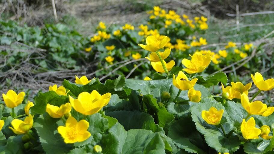 Beskid kwitnący wiosną 8