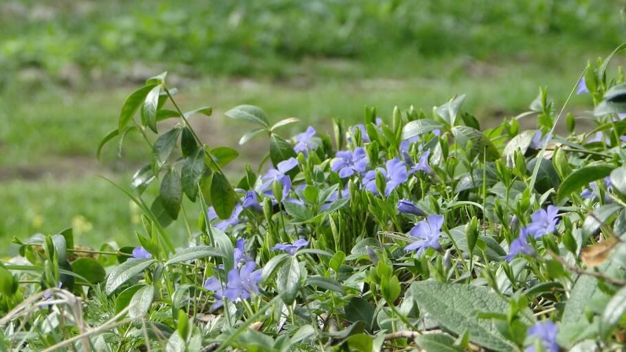 Beskid kwitnący wiosną 9