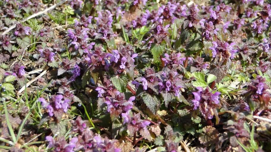 Beskid kwitnący wiosną 11