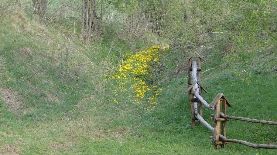 Beskid kwitnący wiosną 12