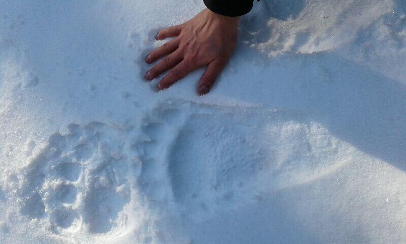Tropy na śniegu 1