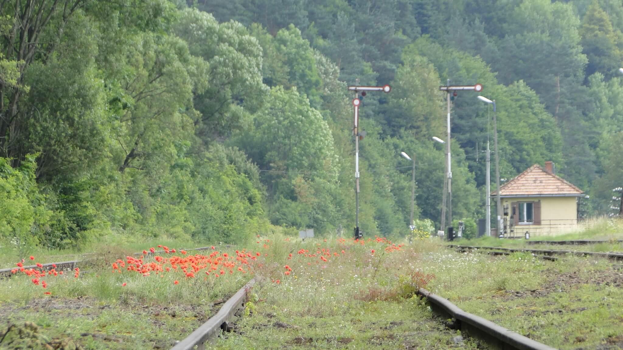 Goście Gutkowej Koliby podróżują pociągiem Wojak Szwejk