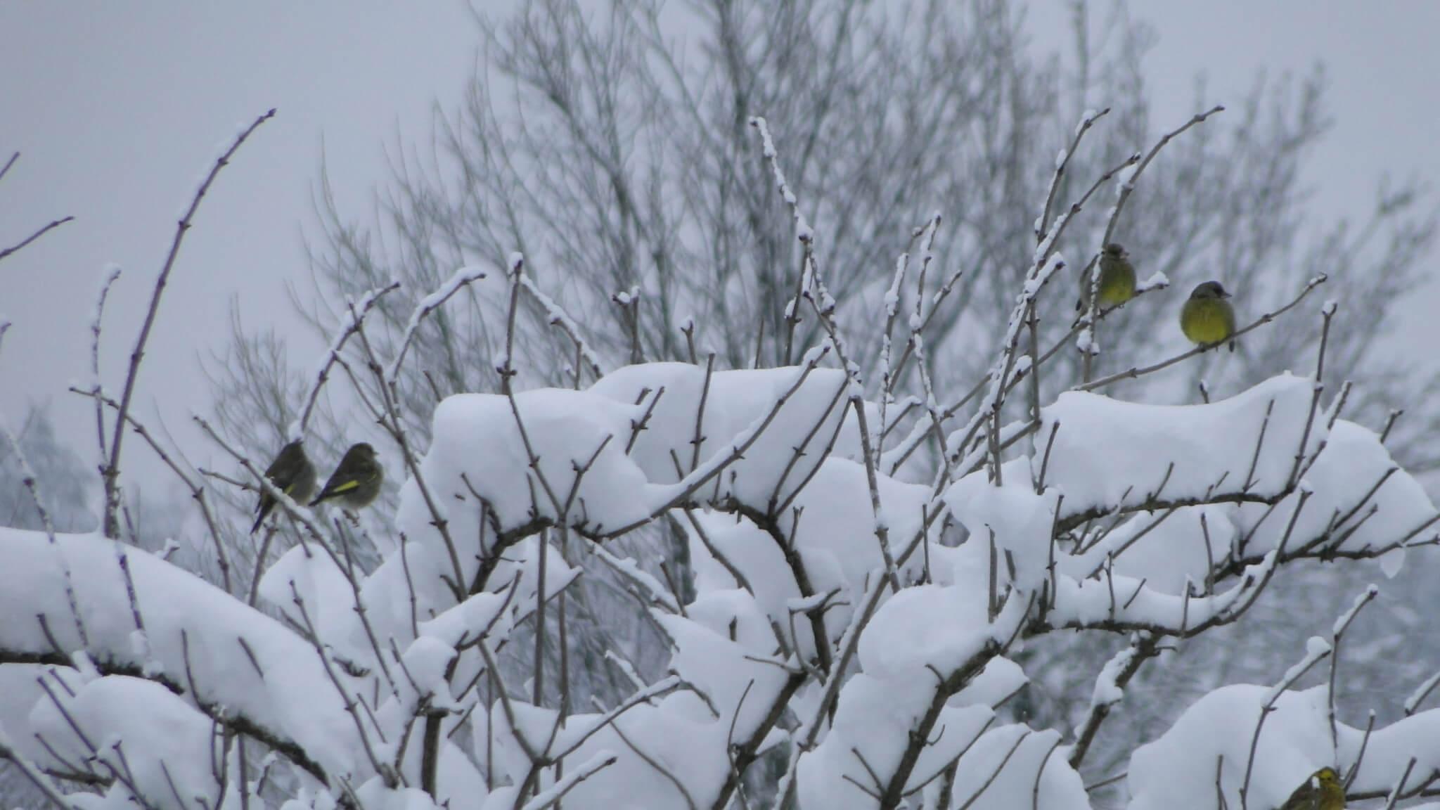 Lutowa zima - śnieżna i mroźna 1