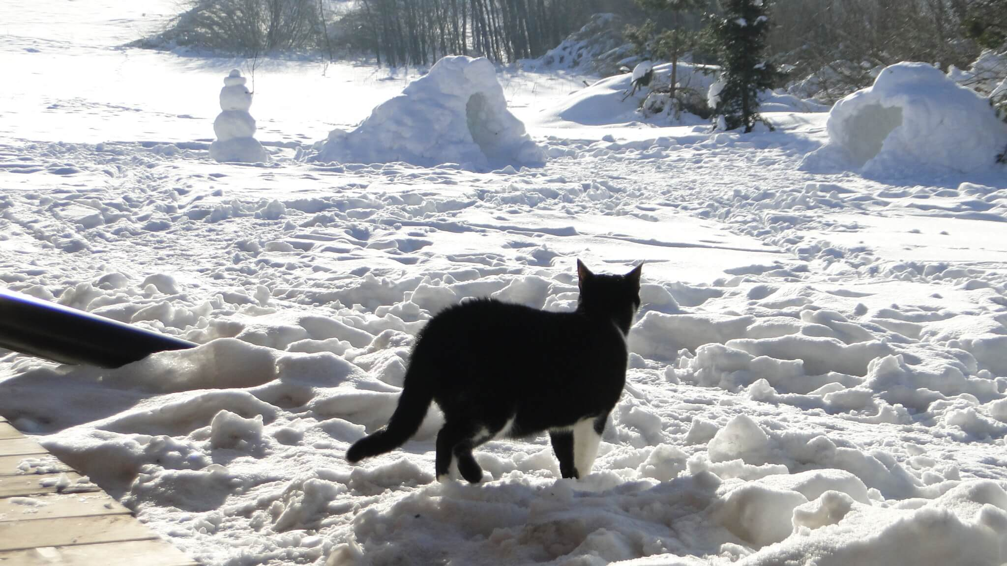 Lutowa zima - śnieżna i mroźna 19