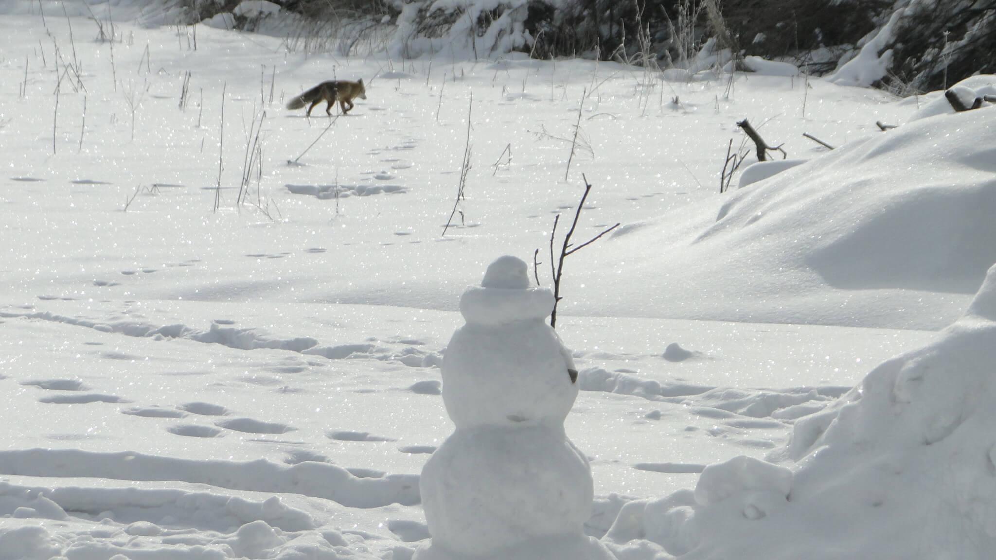 Lutowa zima - śnieżna i mroźna 21