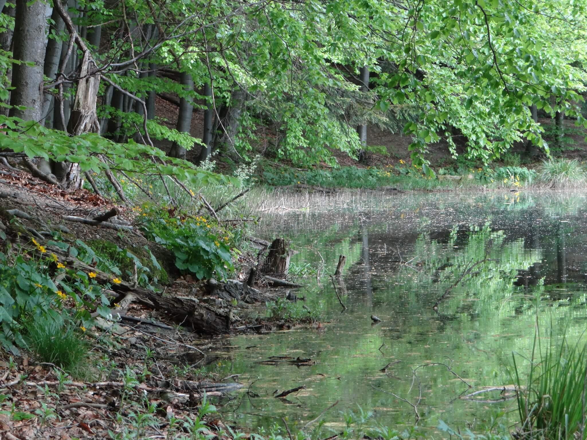 Jeziorka Duszatyńskie 4