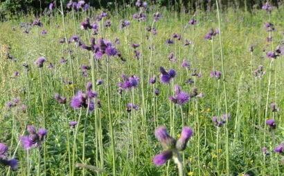 Czerwcowa łąka 6