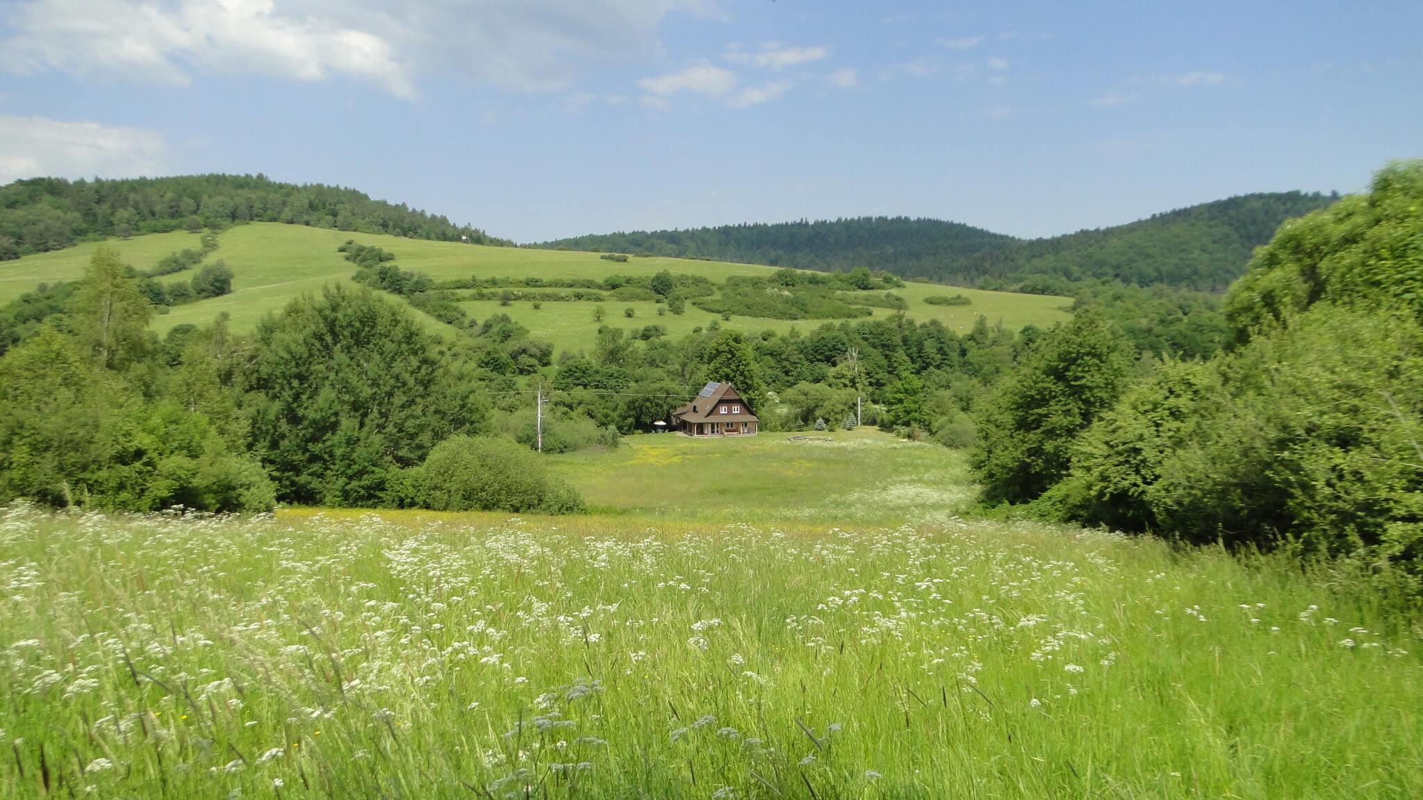 Czerwcowa łąka 7