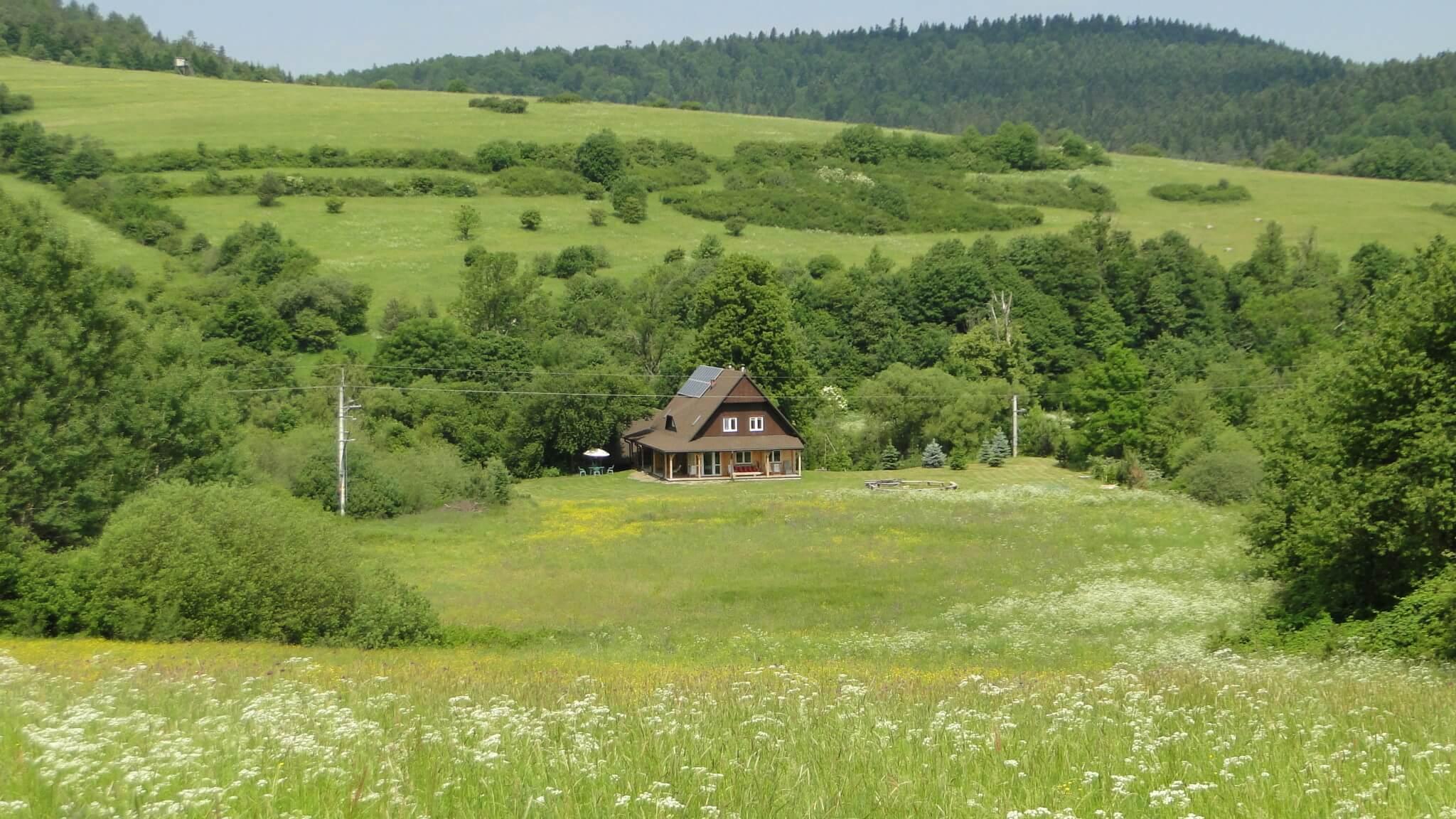 Czerwcowa łąka 8