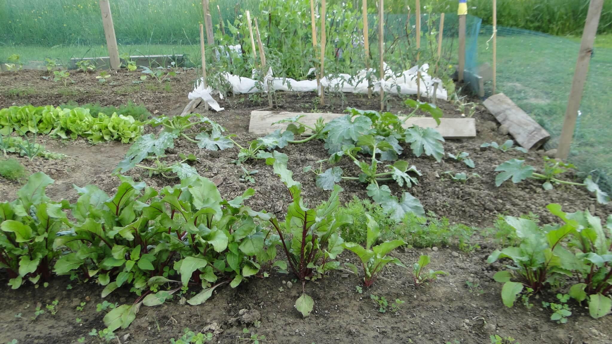Warzywa znaszego ogródeczka 3