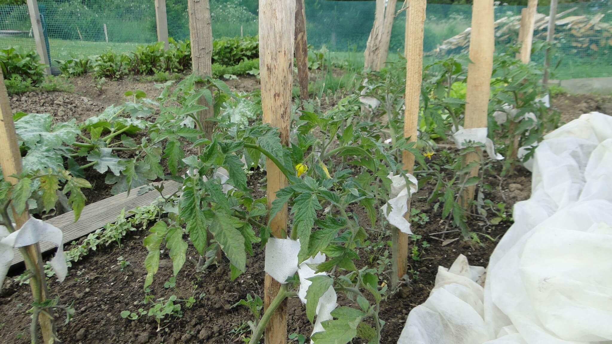 Warzywa znaszego ogródeczka 5