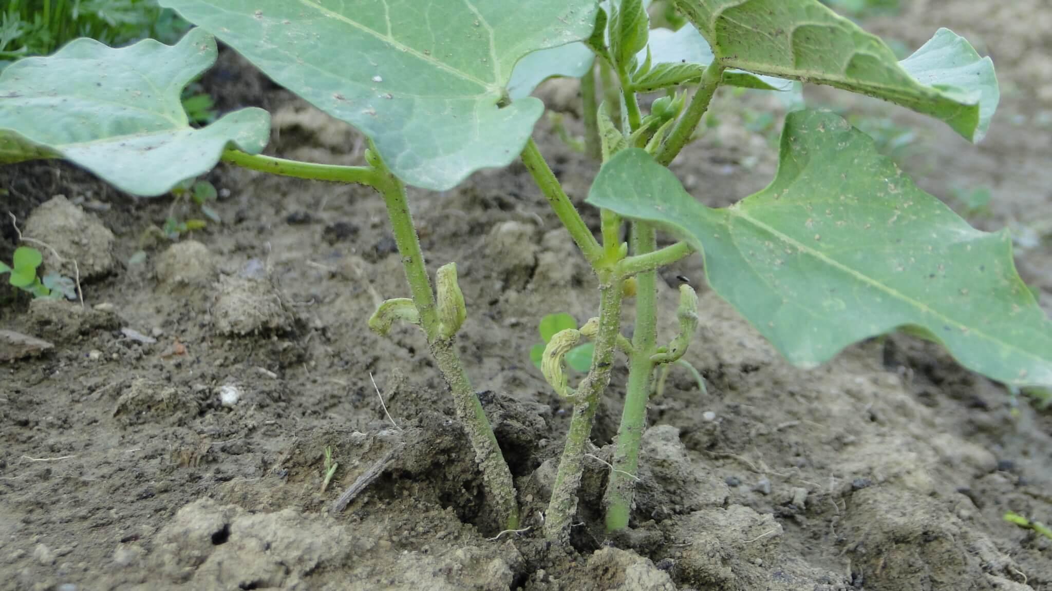 Warzywa z naszego ogródeczka 8