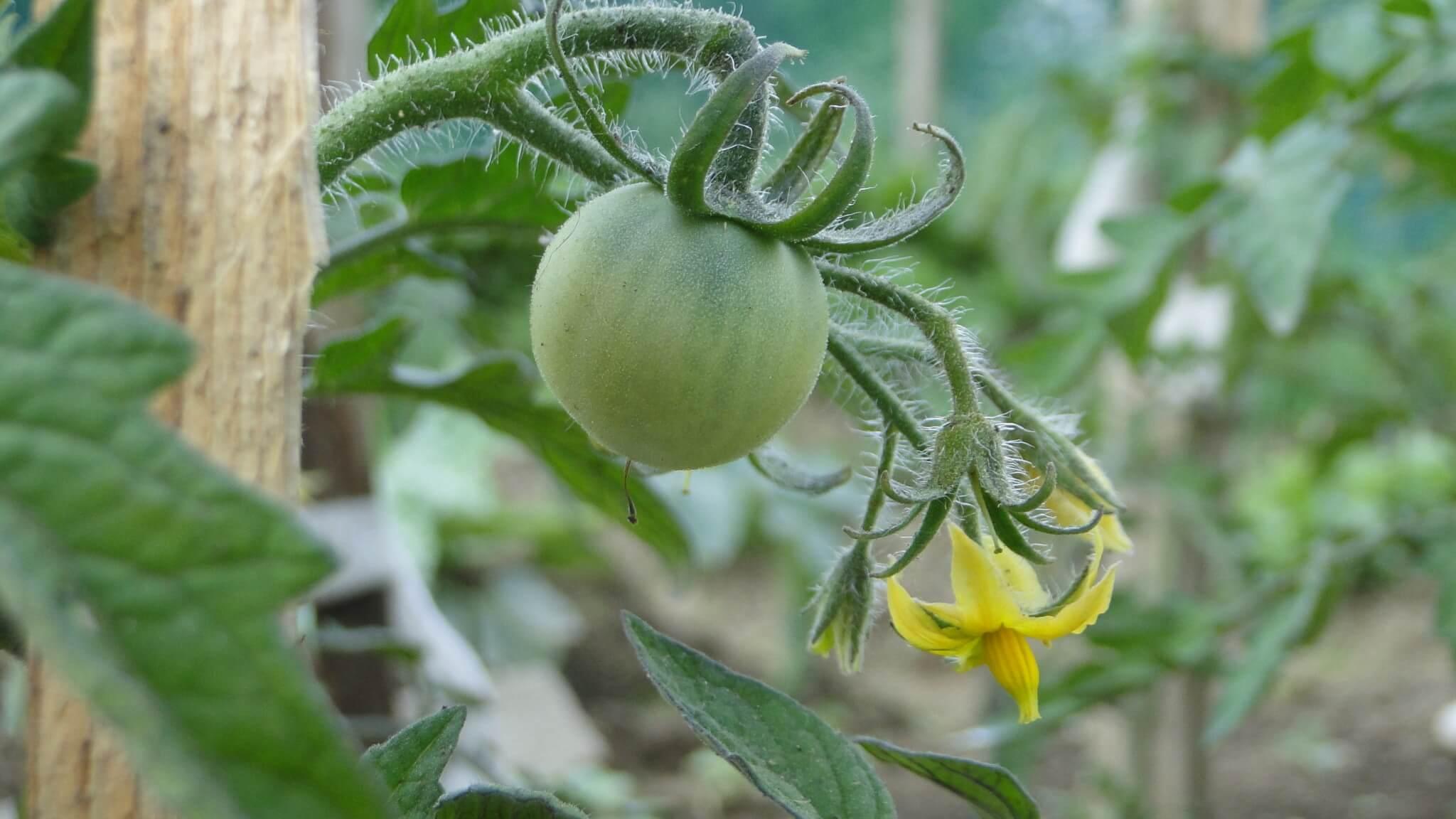 Warzywa z naszego ogródeczka 9