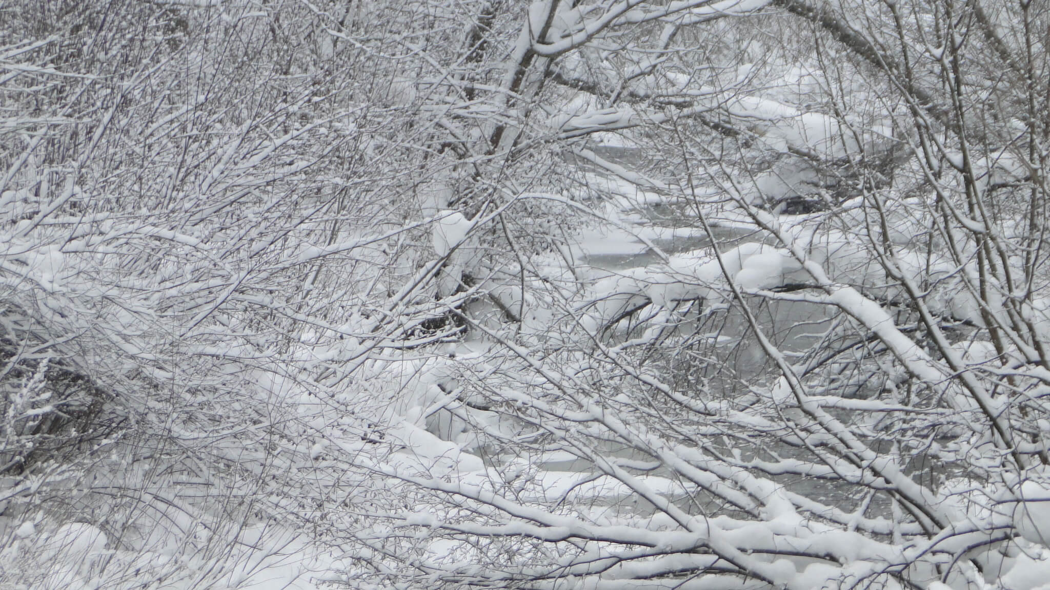 Śnieg,  śnieg, śnieg!... 3