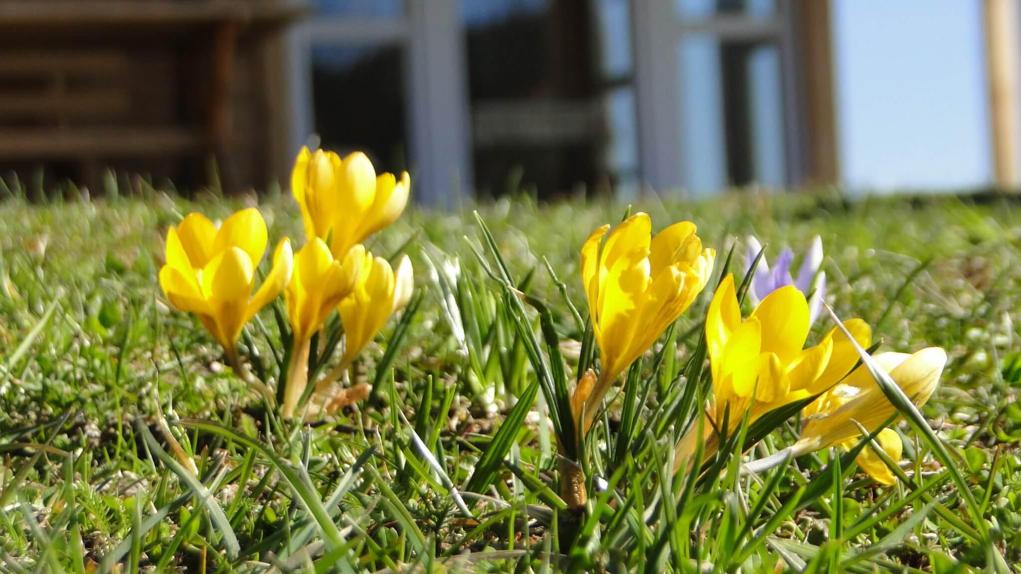 Wiosenne porządki 1