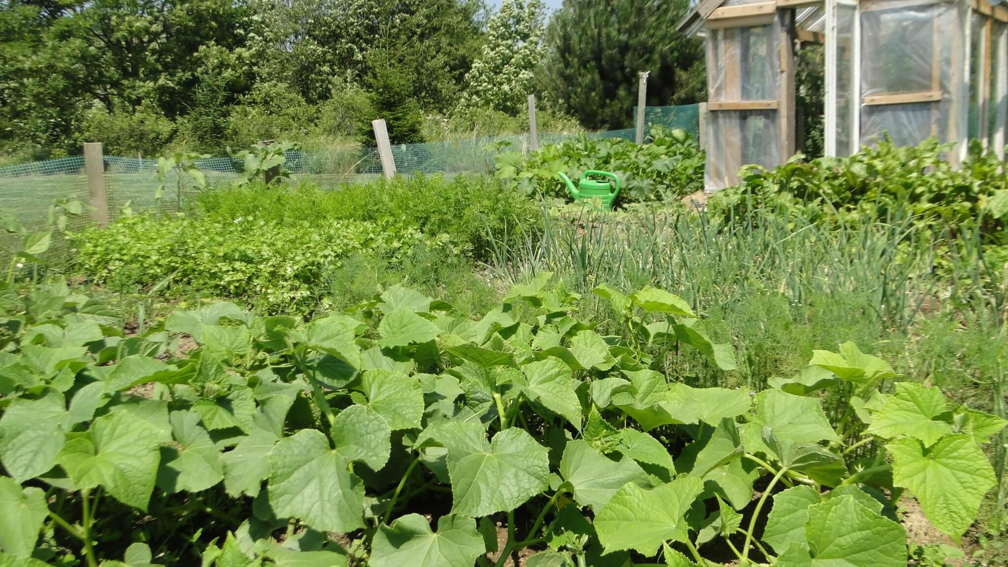 A tymczasem w ogródku... 1