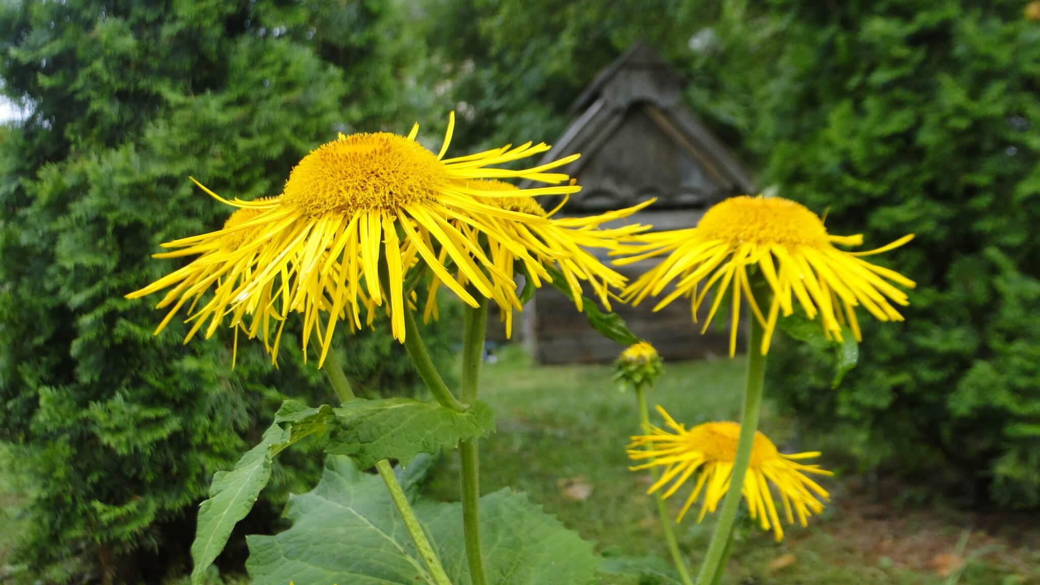 Letnie kwiaty 2
