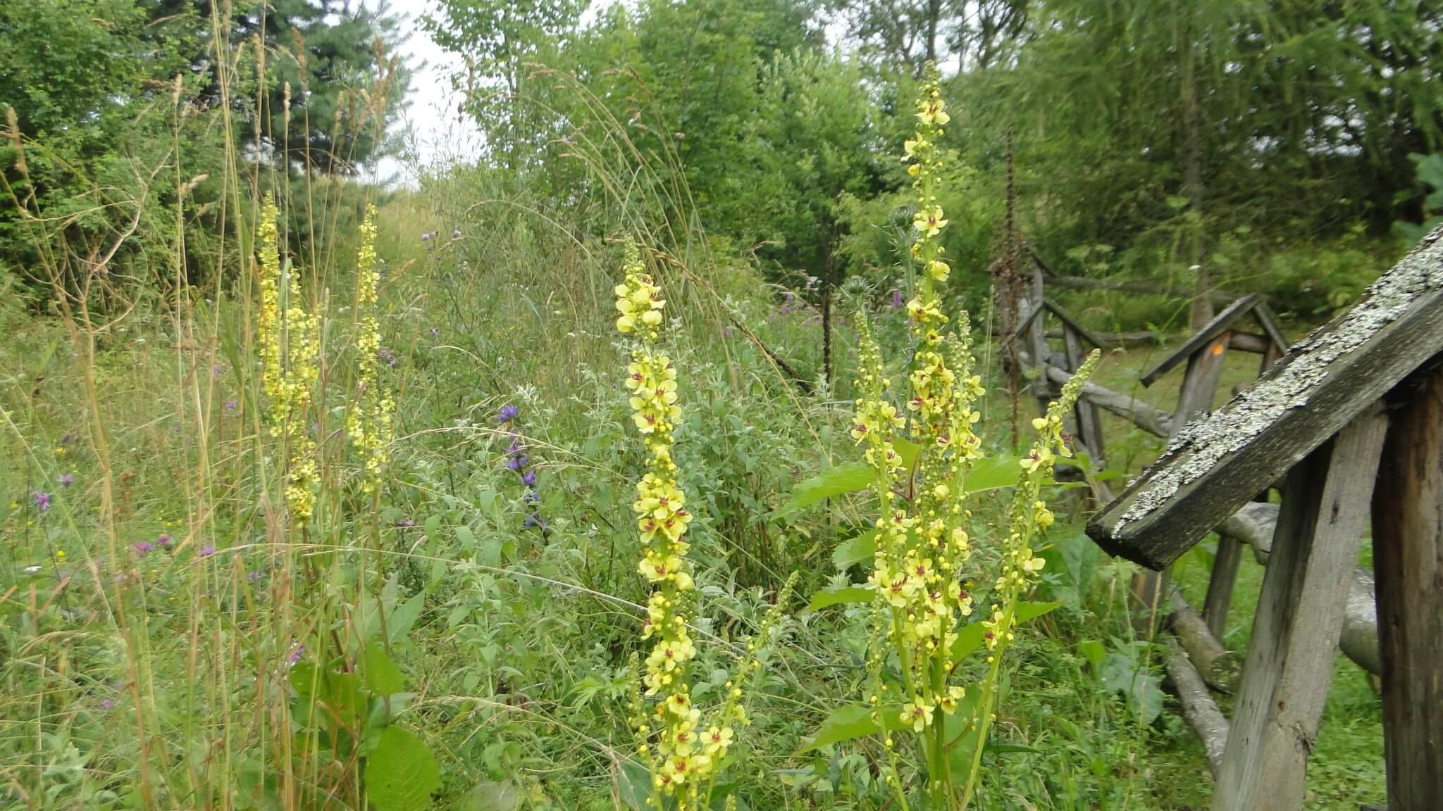 Letnie kwiaty 5