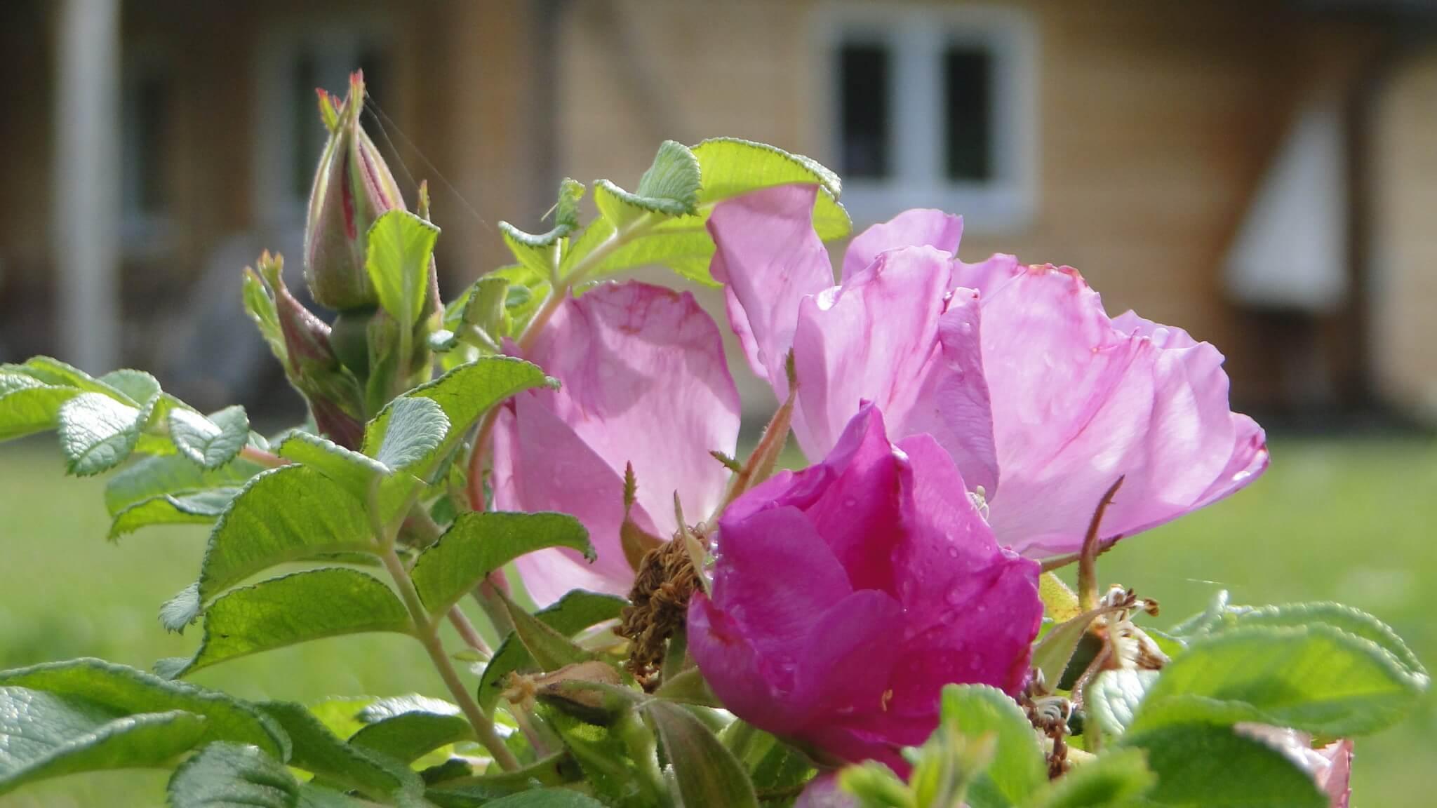 Letnie kwiaty 9