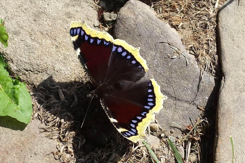 Beskidzkie motyle