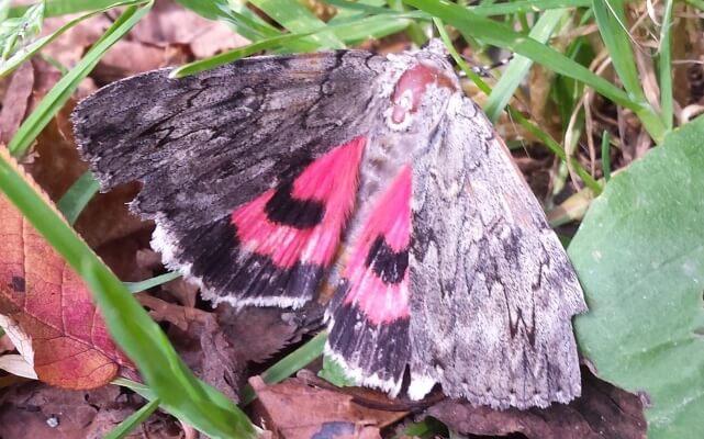 Sezon na motyle