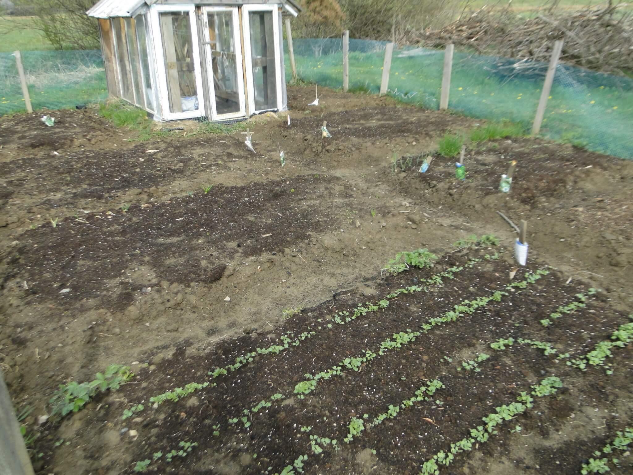 Ogródeczek i... nowy sad!