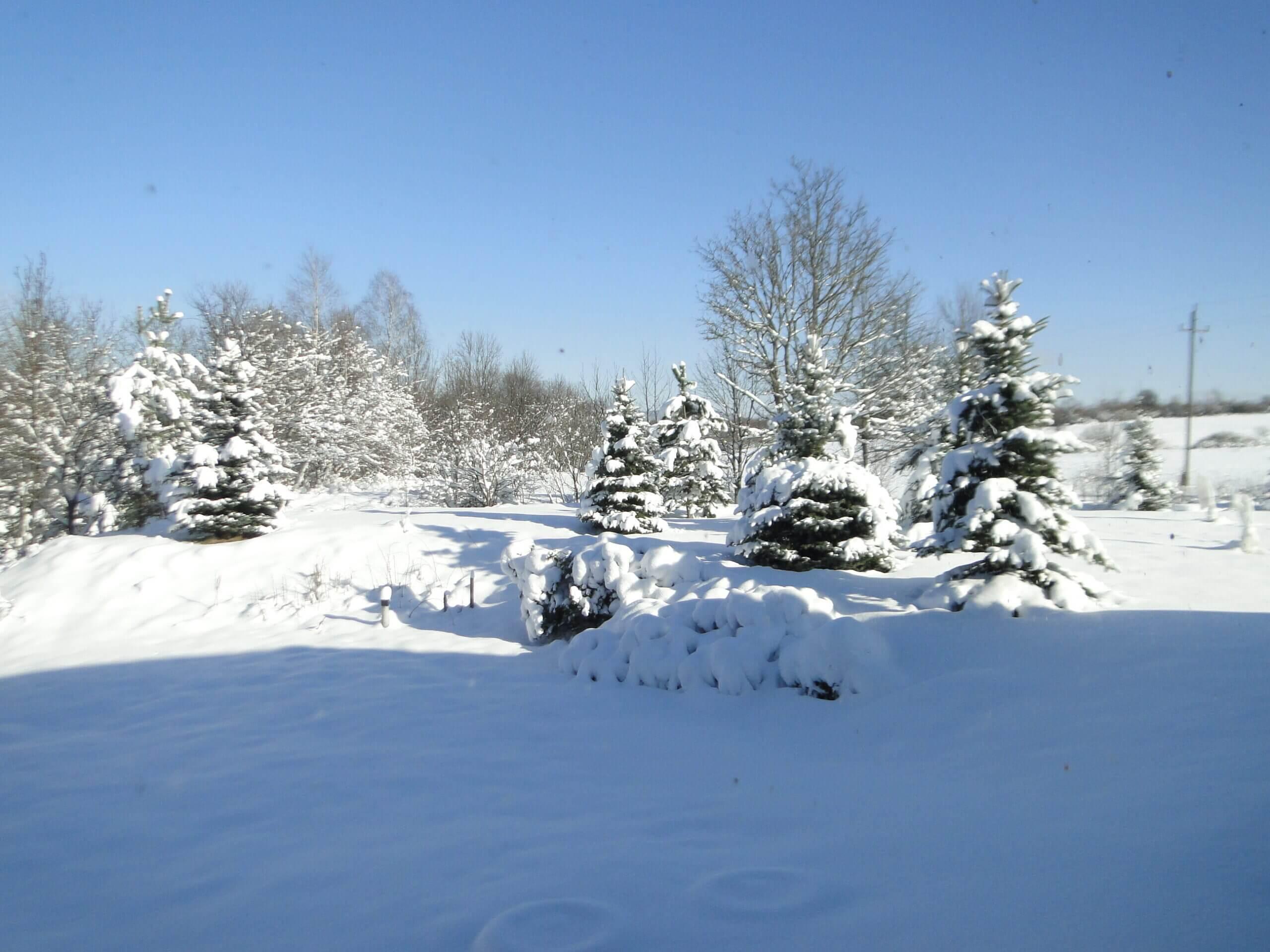 Dziwnej zimy ciąg dalszy