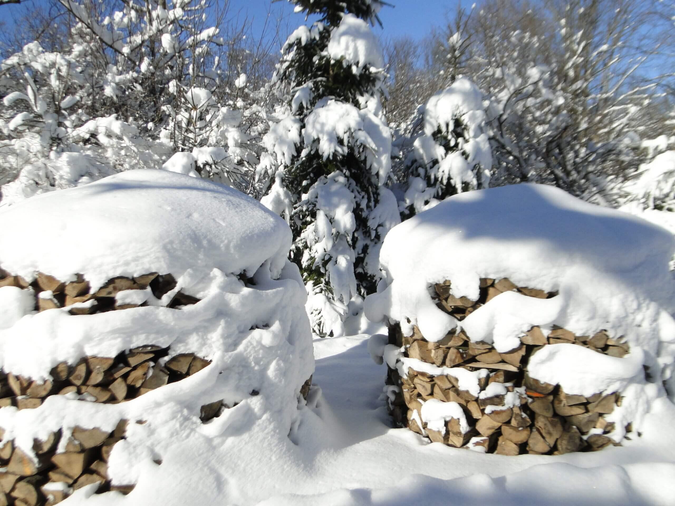 Dziwnej zimy ciąg dalszy 10