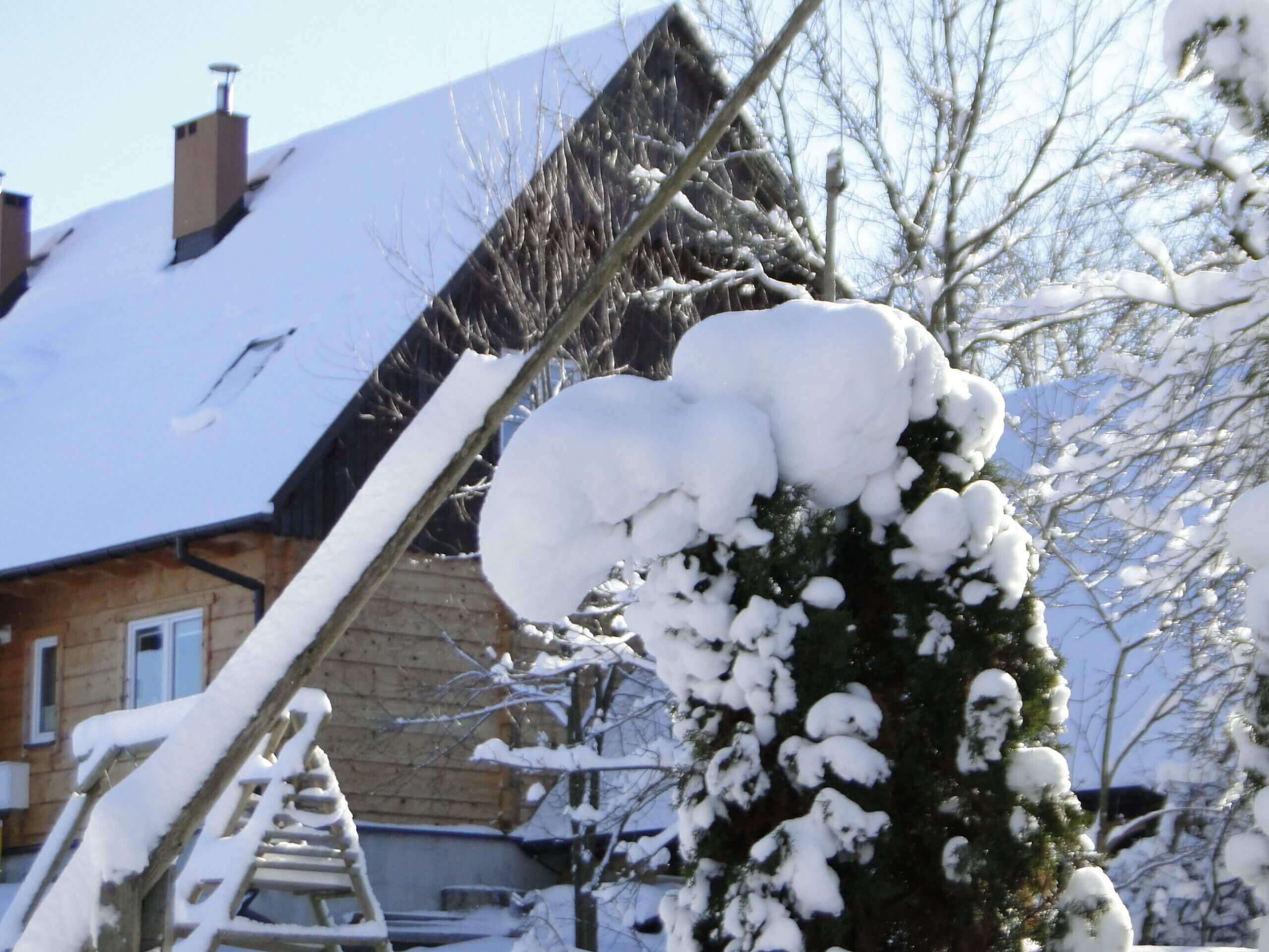 Dziwnej zimy ciąg dalszy 11