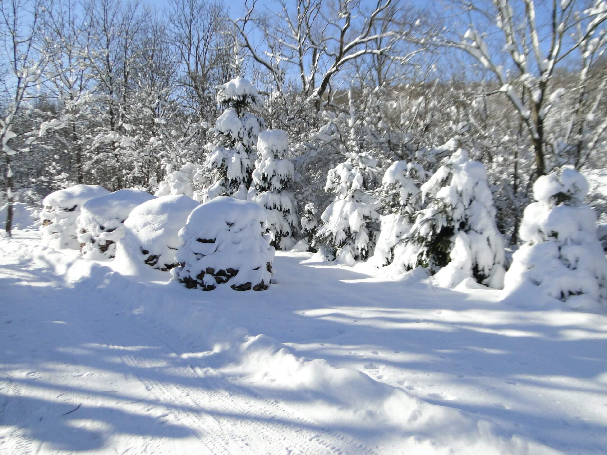 Dziwnej zimy ciąg dalszy 13